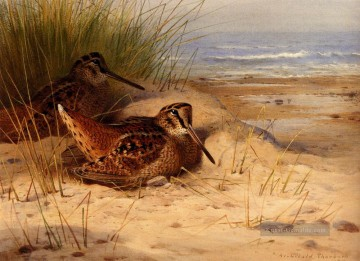 Woodcock Nesting On Ein Strand Archibald Thorburn Vogel Ölgemälde