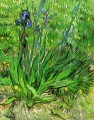 The Iris Vincent van Gogh