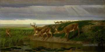 Deer on the Prairie William Beard