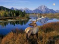 Natur Whitetail Berge