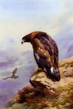 A Golden Eagle Archibald Thorburn Vögel Ölgemälde
