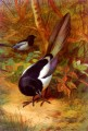 Magpies Archibald Thorburn Vögel