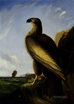 meer kunst - Washington Sea eagle Vögel