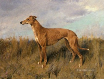 Henrietta Horn A Greyhound Tier Arthur Wardle dog Ölgemälde