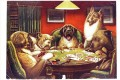 Animal acting human Hunde playing cards Lustiges Haustiere