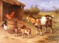 A farmyard Scene With Goats And Chickens farm Tiere Edgar Hunt
