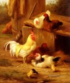 Chickens And Chicks farm Tiere Edgar Hunt