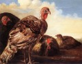 Domestic Fowl countryside painter Aelbert Cuyp