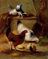 Pigeons And Chickens farm Tiere Edgar Hunt