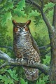 great horned owl Tiere