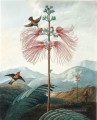 LARGE FLOWERING SENSITIVE PLANT Philip Reinagle klassische Blumen