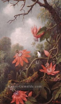 Klassik Blumen Werke - Hummingbird And Passion Blumenmaler Martin Johnson Heade