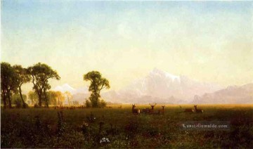 Stadt Ölbilder - Deer Grazing Grand Teton Wyoming Albert Bierstadt