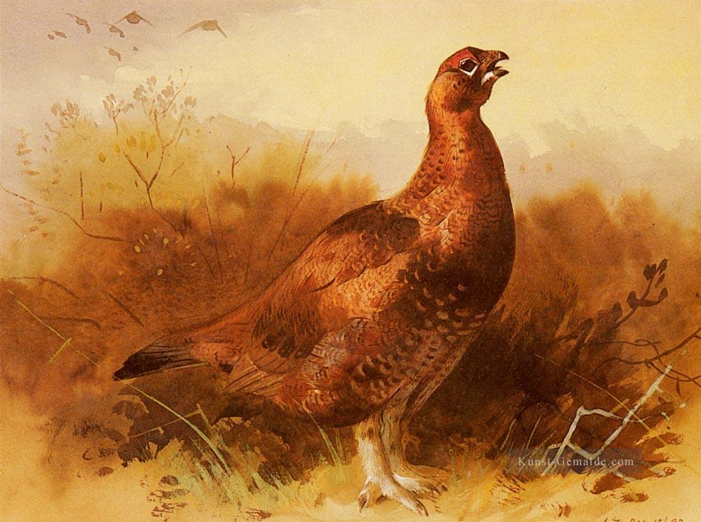 Hahn Grouse Archibald Thorburn Vogel Ölgemälde